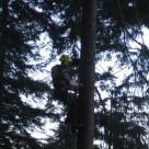 Arbeit am Baum