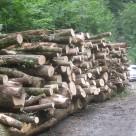 Eschenholz für die Hackschnitzelgewinnung
