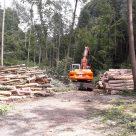 Schadholzaufarbeitung